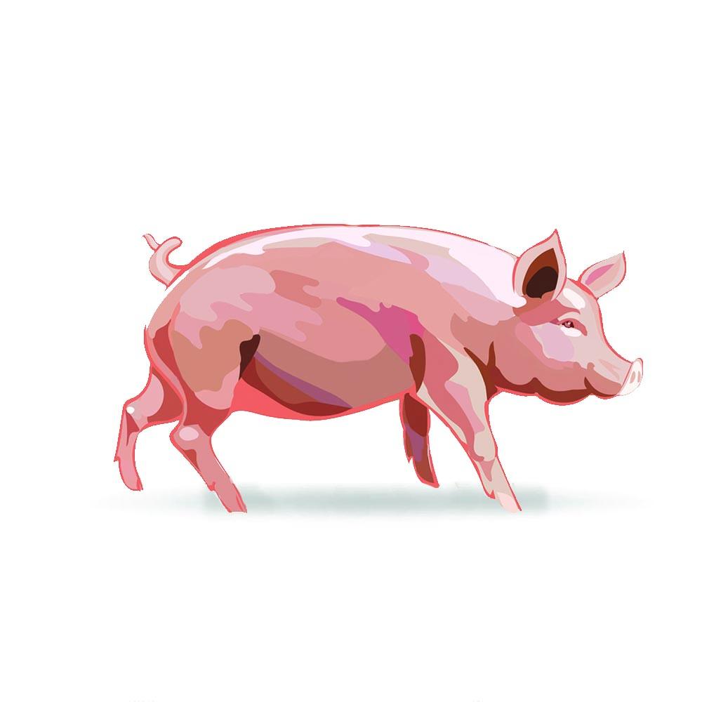 disegno maiale