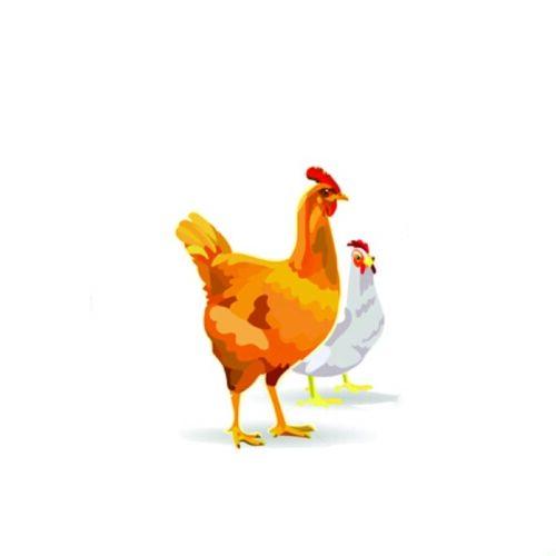 due galline sfondo una bianca e una gialla