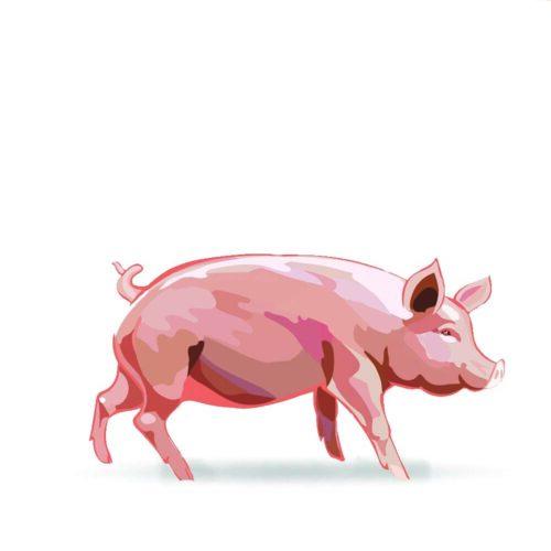 disegno maiale rosa